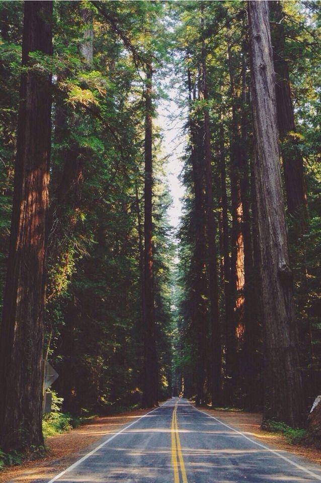 ※ iPhone wallpapers ※me encanta salir y ver los arboles Me hace sentir libre, que mejor sensacion.