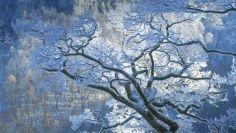 A téli erdő csodája