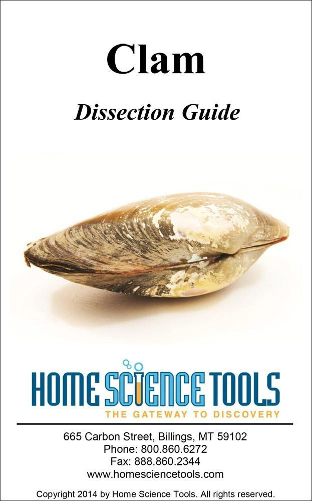 34 best Dissections images on Pinterest   Animal science, High ...