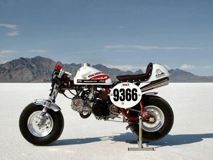 the fastest Honda Monkey Bike in the World