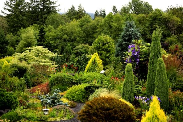 Conifer Garden Ideas ideas for a good conifer garden Probably A 30 Year Old Garden But Love The Textures And Colors Gardening Ideas Pinterest Gardens Circles And Over The