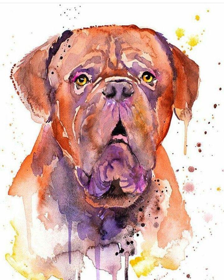 Mejoramigodelhombre Dogo De Burdeos Pintura Perro Dibujo De Animales