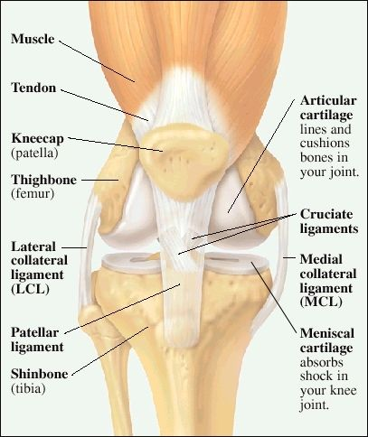 Front view of knee joint | Resurgens Orthopaedics ...