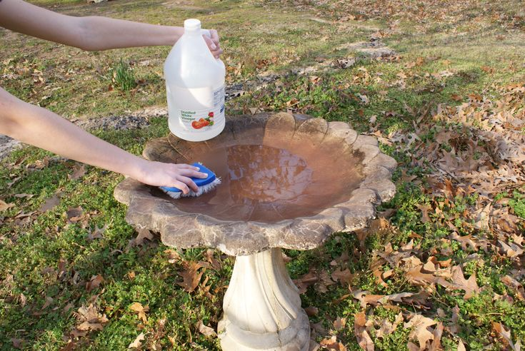 17 Best Images About Bird Bath Diy On Pinterest Serving