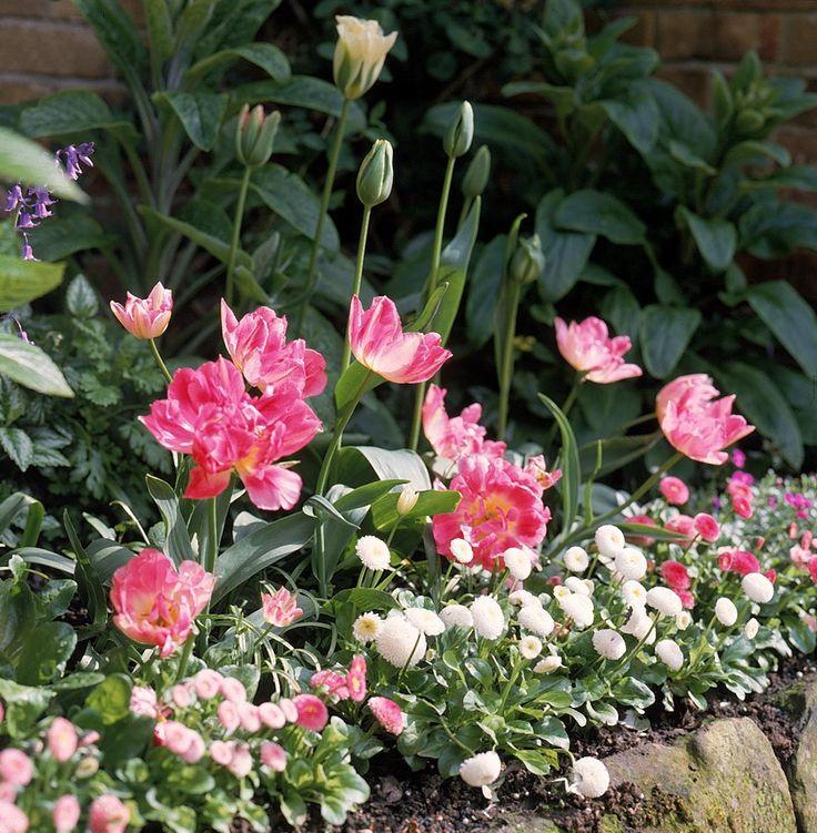 bulb flowers | Summer Flower Bulbs