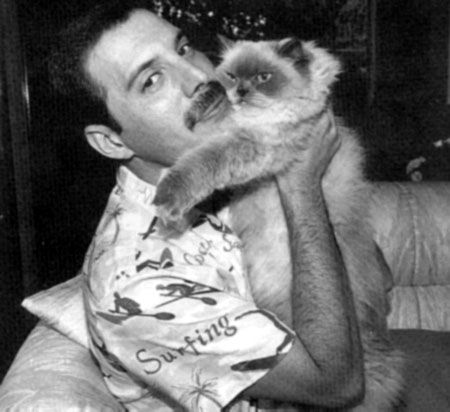 Freddie Mercury and cats | Kitty Bloger