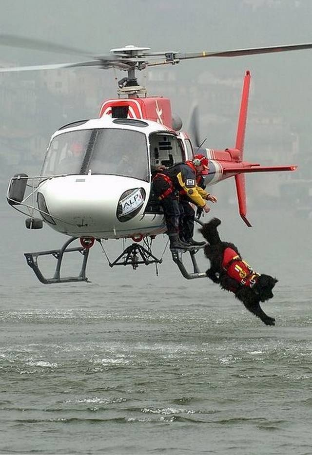 Search and Rescue Dogs