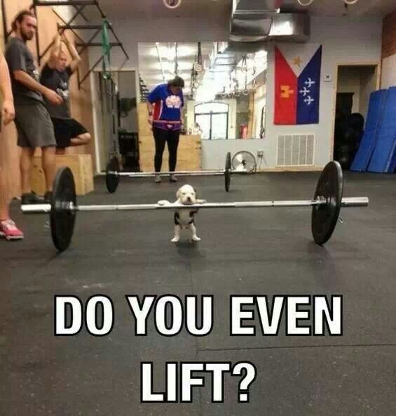 136 best fitness humor images on pinterest gym humor
