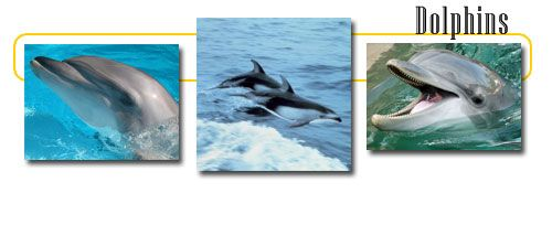 Information about dolphins