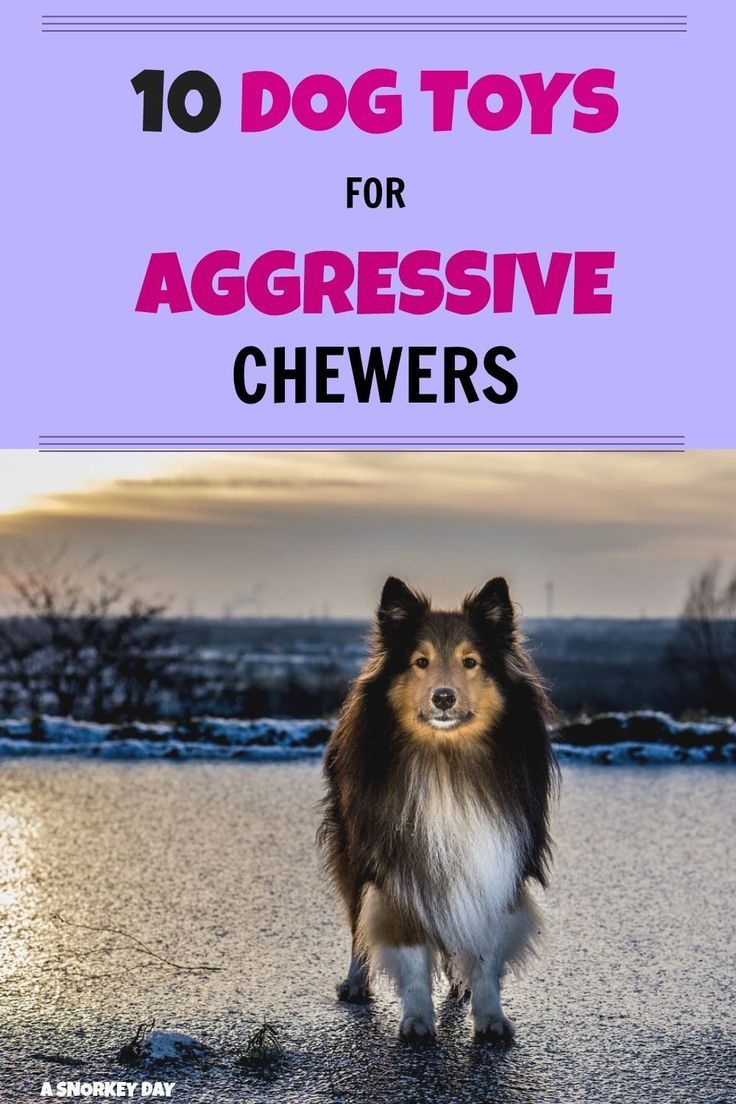 10 Dog Toys For Aggressive Chewers Aggressive Dog Dog Toys