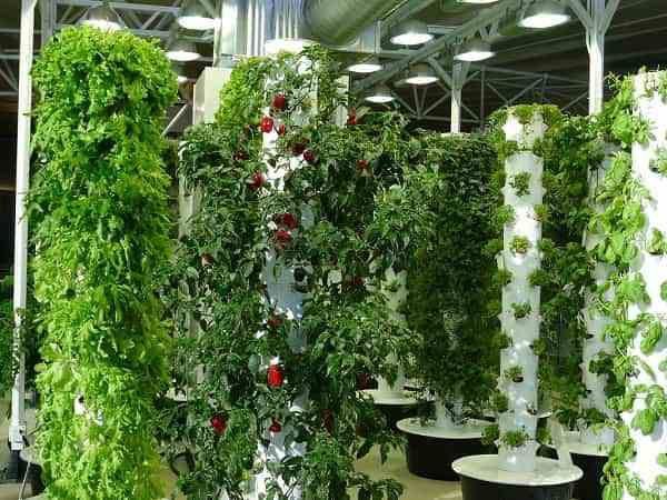 Vertical farming. What it is and what are its advantages and disadvantages