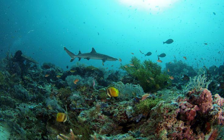 Dive-trip-sipidan dive trips (2)