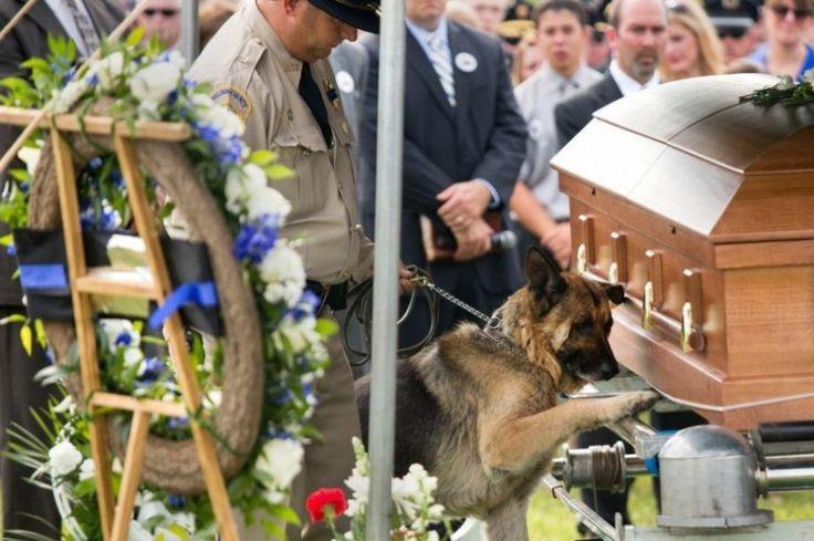 Figo, un chien de police du Kentucky, fait ses derniers adieux à son partenaire humain, l'agent Jason Ellis, tué dans l'exercice de ses fonctions