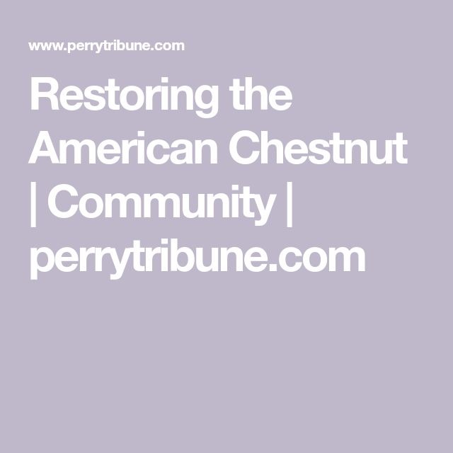 Restoring the American Chestnut | Community | perrytribune.com