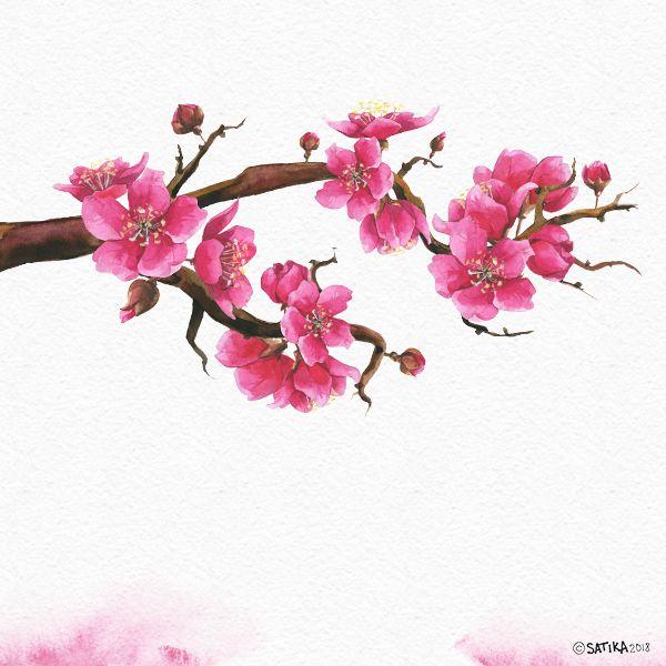 Pink Dreams Of Sakura Watercolor Set Sakura Tree Tree Drawing Flower Drawing