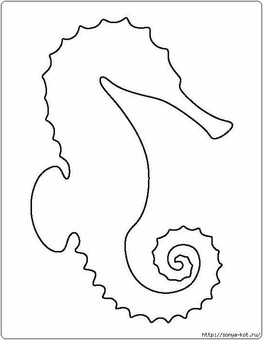 Mejores 15 imágenes de mar en Pinterest   Conchas, Conchas marinas ...