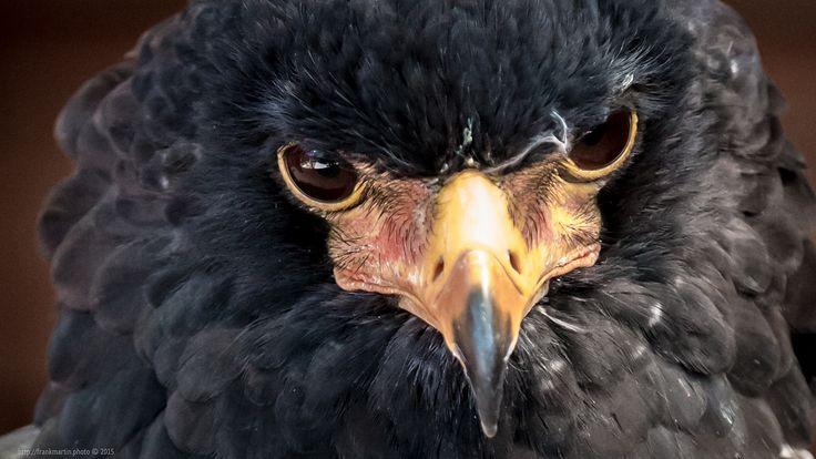 Eagle https://flic.kr/p/yHCAcn |