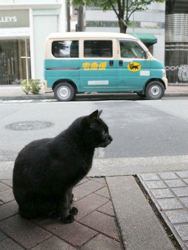 東京でのんびり暮らす外猫たち (2) 実写版! 黒猫ヤマトの宅急便!? | マイナビニュース