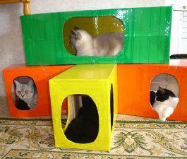 Resultado de imagen para planos para baño de gatos