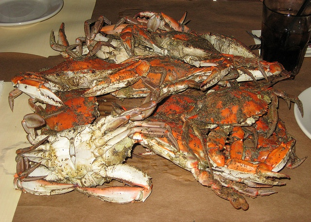 Steamed blue crabs | seafood my favorite | Pinterest