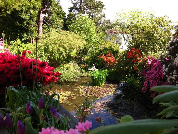 Декоративный пруд с водными растениями