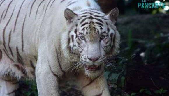 Sociedad Protectora de Animales en Cancún elabora denuncia contra funcionarios de Semarnat que emitieron permisos al hotel en Riviera Maya