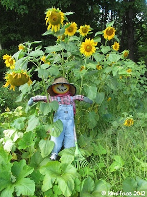 Jimtown - My little scarecrow in the sunflower patch.