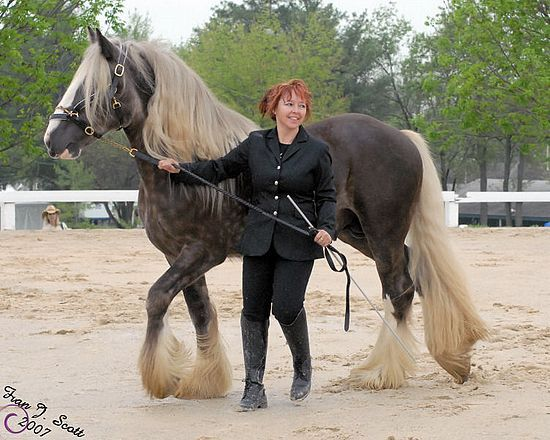 """Royal Excalibur - Top Silver Dapple Gypsy Stallion of 2013 The results of a new internet based poll responders were asked to name """"Top Silver Dapple Gypsy Stallion of 2013"""" produced a predictable final result, Gypsy Dance Ranch's Sir Royal Excalibur."""