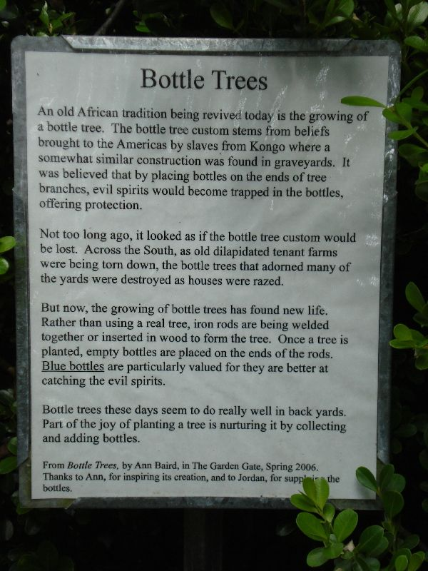 Outdoor Bottle Tree | Kanapaha Botanical Gardens Bottle Tree - The origin of Bottle Trees.