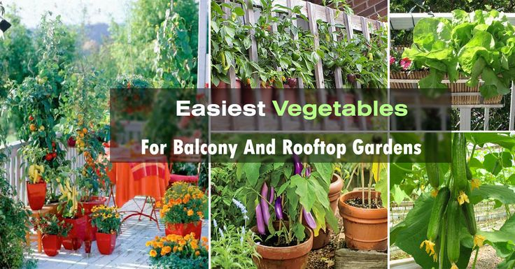 Vegetable Garden Containers Ideas: Best 25+ Container Vegetable Gardening Ideas On Pinterest