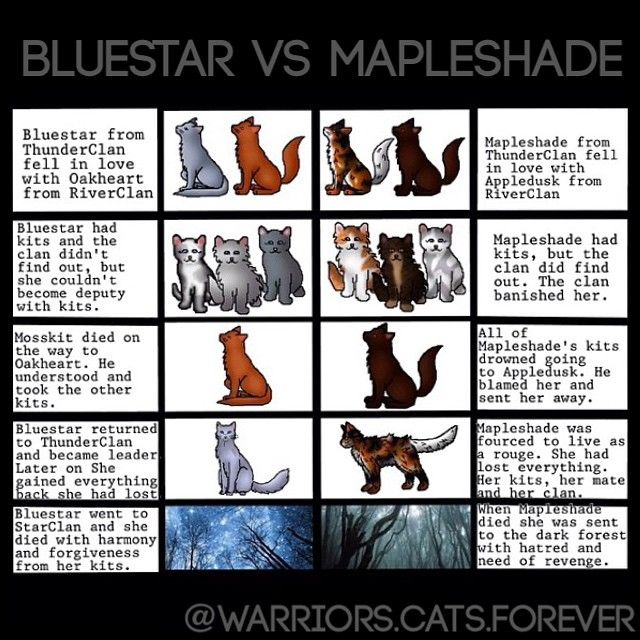Warrior Cats Vision Of Shadows Release Date : Bitcoin And