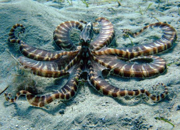 Day octopus | Pop Culture Moment of the Day: Octopuses or Octopi?