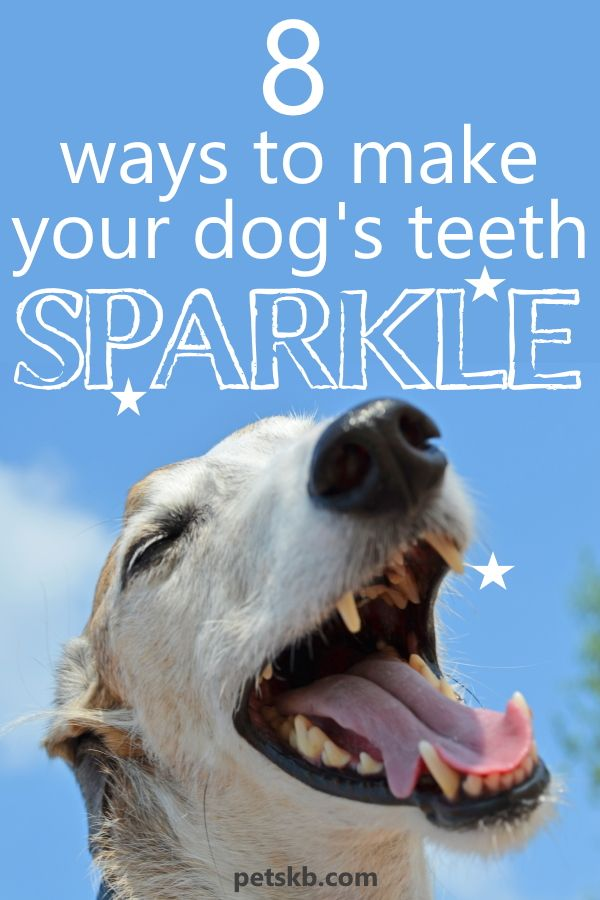 How To Look After Your Dog S Teeth Dog Teeth Dog Breath Dog Care