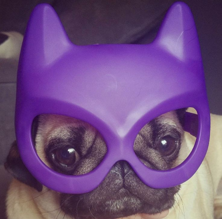 It is time to meet another adorable pug from the social media scene. This week it is the super cute Barry. Head on over and get to know Barry. http://www.thepugdiary.com/social-pug-profile-barry/