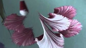 One Stroke Orchidee * Primadonna * Carmen Gulino - YouTube