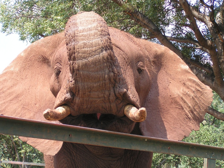 Elephant sanctuary outside Hartebeespoort Dam near Johannesburg.