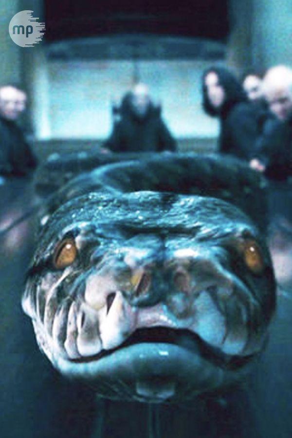 Voldemorts Schlange Nagini In Phantastische Tierwesen 2 Kann Das Sein Diese Spannende Harry Potter Theories Harry Potter Voldemort Harry Potter Illustrations