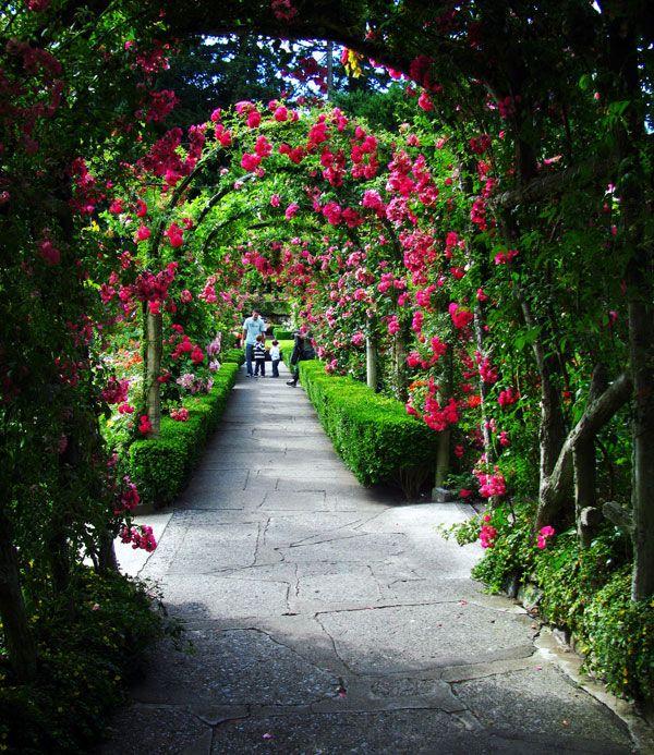 奔跑吧,在最美的溫哥華馬拉松. #布查特花園 #花園