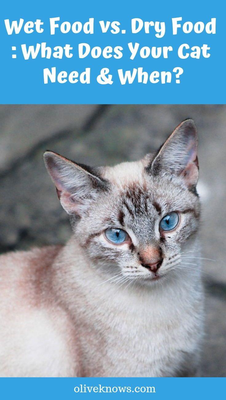 Wet Food Vs Dry Food Sick Cat Cats Best Cat Food