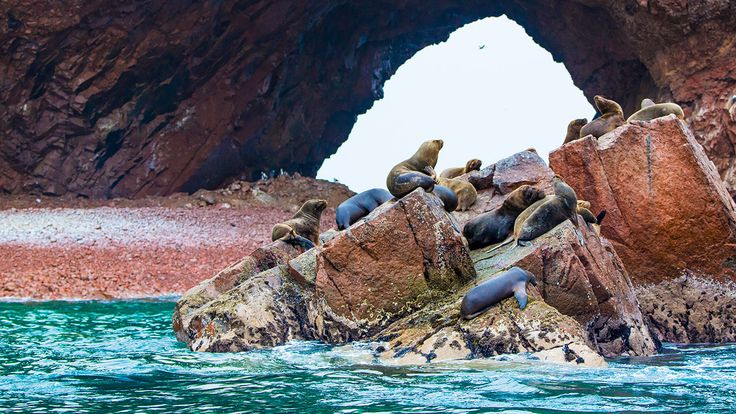 I muggiti dei leoni marini formano un coro sonoro udibile in tutte le #Ballestas, suono che si combina perfettamente con la bellezza naturale e selvaggia delle isole.
