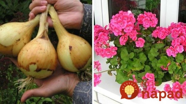 Držte sa ich a nebudete ľutovať! Cenné triky našich babičiek pre najkrajšie kvety a bohatú úrodu!