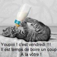Un chat boit sont lait au biberon