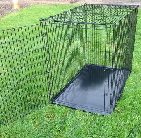 Great Danes Puppy Great Dane Or Similar Size Dog Cage Xxl Dog