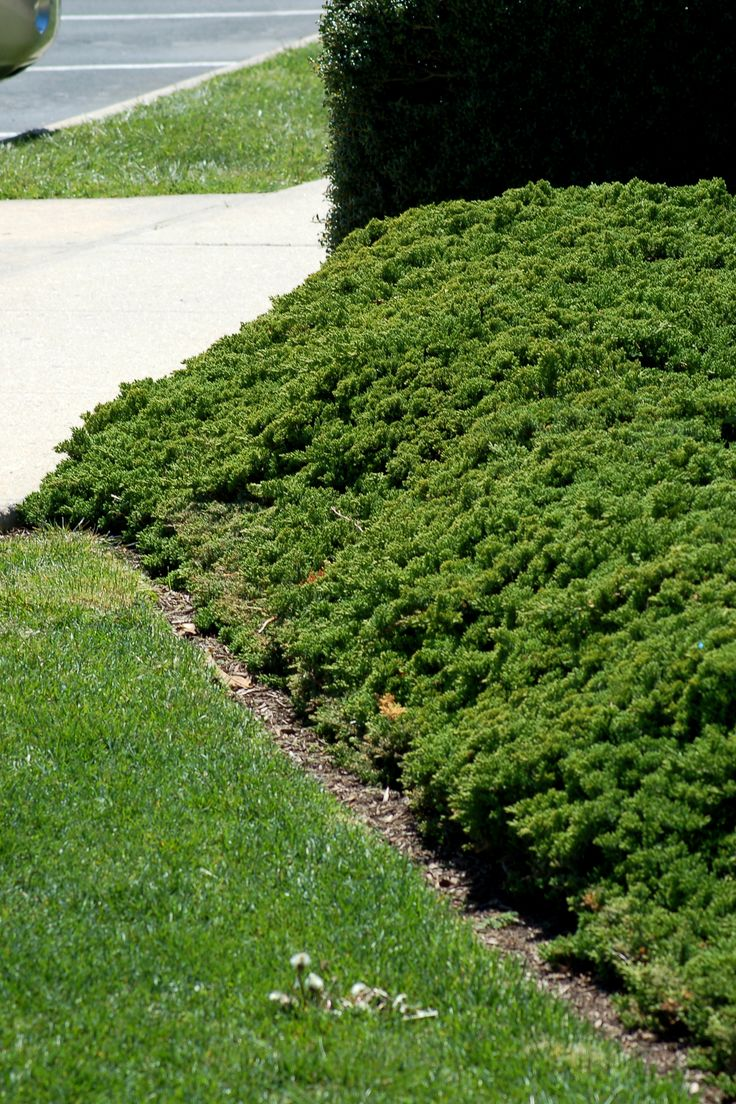 The 25 Best Steep Hillside Landscaping Ideas On Pinterest