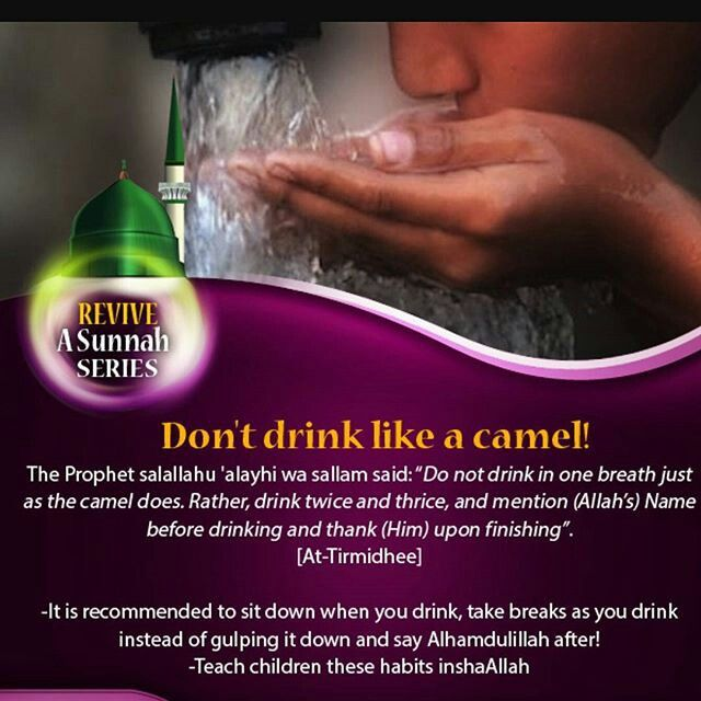 Dont Drink Like A Camel