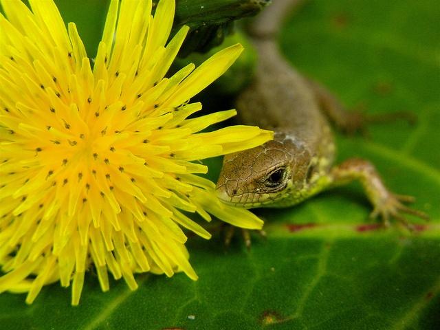 little friend, via Flickr.