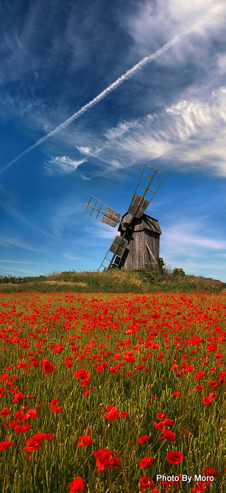 Wildflowers and windmill, WHAT A GORGEOUS SHOT. _ >> Please Like before you RePin <<< _ Personally Sponsored by Rick Stoneking Sr. Owner/Founder @Int'lReviews - World Travel Writers & Photographers Group. We Write Reviews & Photograph sites for Travel, Tourism & Historical Sites clients. Rick.Stoneking@yahoo.com