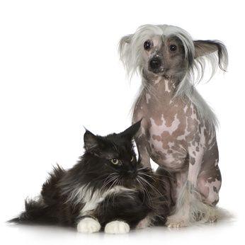 Het kan soms nogal wat voeten in de aarde hebben om de vacht van je hond of kat in topconditie te houden. In dit artikel behouden we je voor veelgemaakte fouten bij de vachtverzorging.