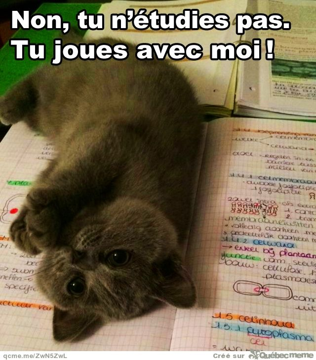 Aussitôt que j'veux étudier..