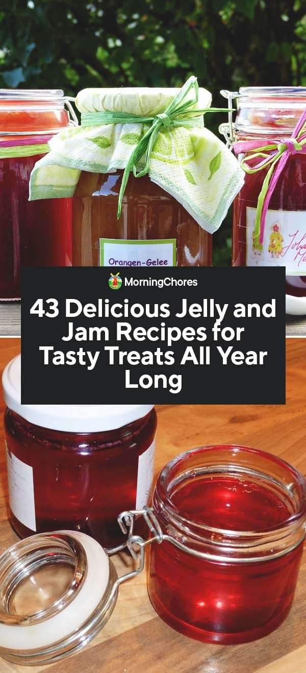43 Delicious Jelly and Jam Recipes for Tasty Treats All Year Long